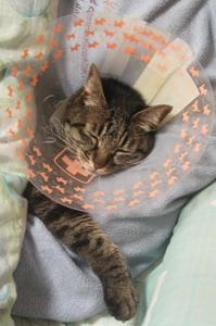 エリカラ腕枕
