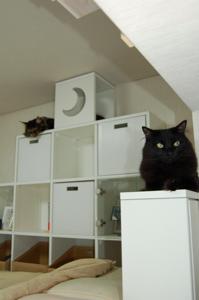 猫階段付きロフトベッドだよ♪