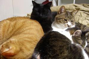 4匹の猫団子