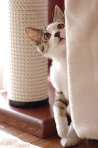 ソファの陰から見上げる子猫