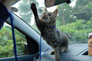 車で「はーい」♪