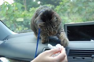 車の中で遊ぶみゅうちゃん♪