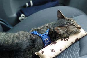 キッカーで遊び疲れて眠るみゅう