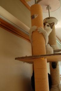 木登りテトラ