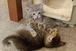 戦う子猫♪