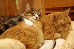 ちゃあちゃんを枕にお昼寝
