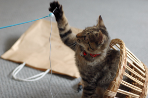 子猫は簡単に遊んでくれるよね~
