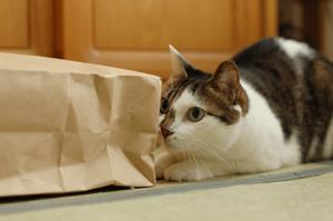 紙袋は色々使えるよ!