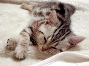子猫の寝姿は無条件に可愛い