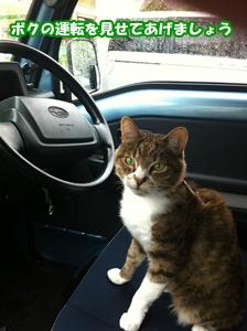 運転見せて!