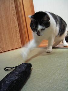 勇気を出して猫パ~ンチ!