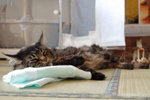 氷枕で寝るだいちゃん