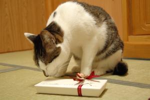 コメントは読者さんからのプレゼント♪