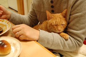 夕飯はビーフシチュー♪
