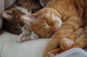疲れを取るにはゆっくり寝るに限るね