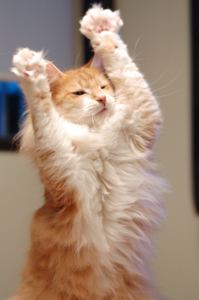 猫トレーニング、ばんざ~い♪