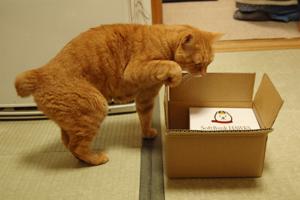 この箱に触る、をクリッカー中