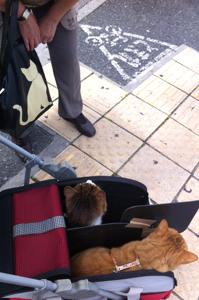 猫ちゃんバッグでこんにちは♪