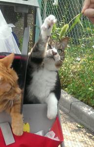 猫じゃらし欲しいヒト~