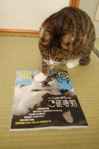 猫びよりだよ。