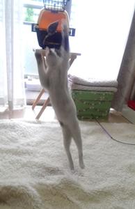 ネズミに向かってジャ~ンプ!