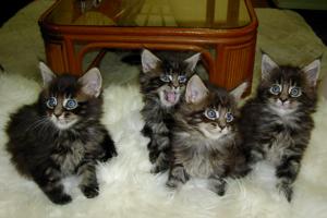 子猫たちがいっぱい♪