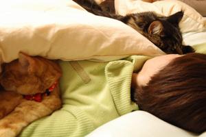 猫 一緒に寝る 腕枕